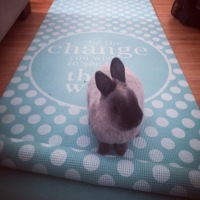 Gym Bunny Spotlight!